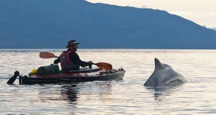 nautiraid-kayak-baleine